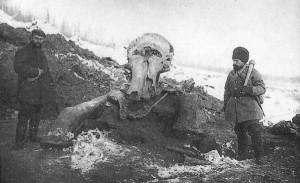 Beresovkamammoth