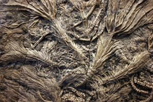 Crinoid_Fossils_of_Jurassic