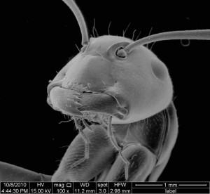 electronmicroscopeantspecimen