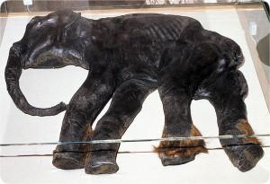 mammoths-baby_dima
