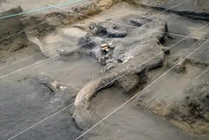 mamut-15