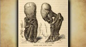 skull czaszka-01