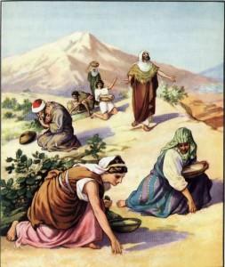 Gathering manna Exodus 16:14-16