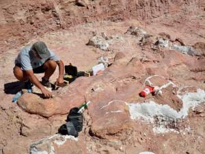 HT_mef_argentina_dinosaur_fossil_5_jt_140517_4x3_992