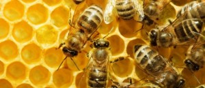 Bees-675x291