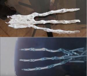 c5bec3f93af39f703e0f818c58f373fd--human-human-ancient-aliens